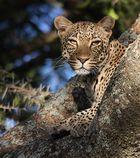 Mein schönster Leopard