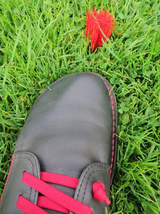 Mein Schuh und das rote Gras...