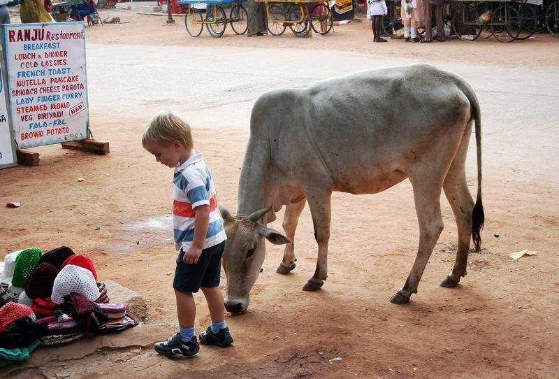 Mein Sohn mit einer Heiligen Kuh in Indien