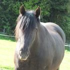 mein Special-Horse Candra