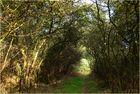 Mein Spiel mit Licht und Schatten im Märchenwald