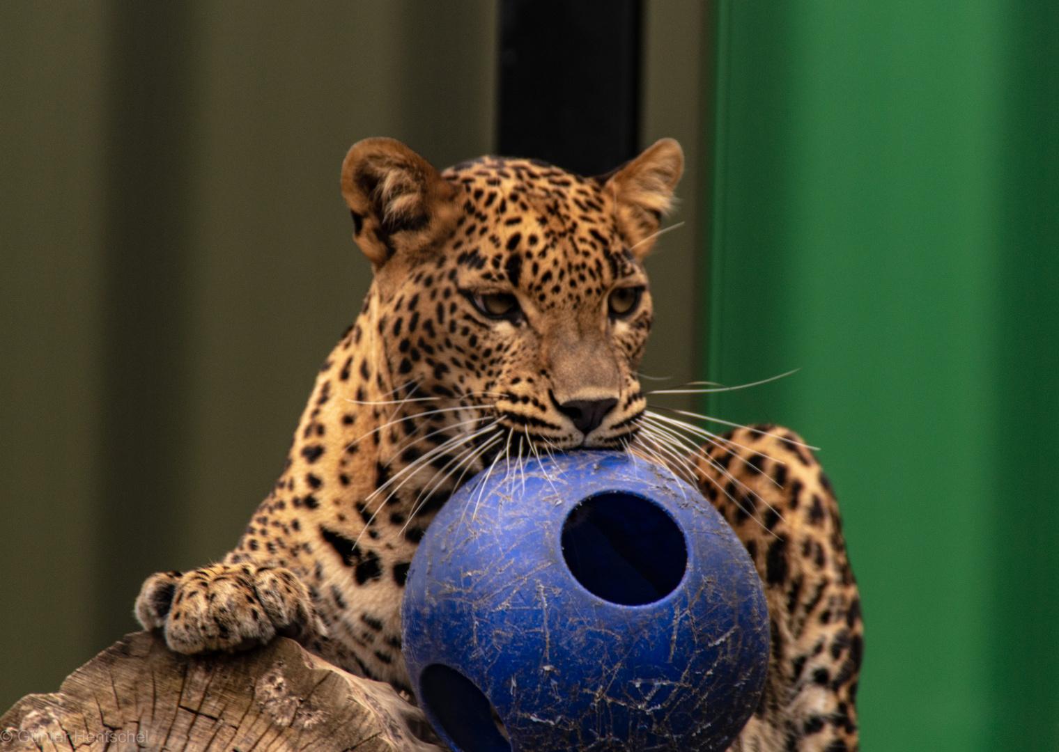 Mein Spielball.
