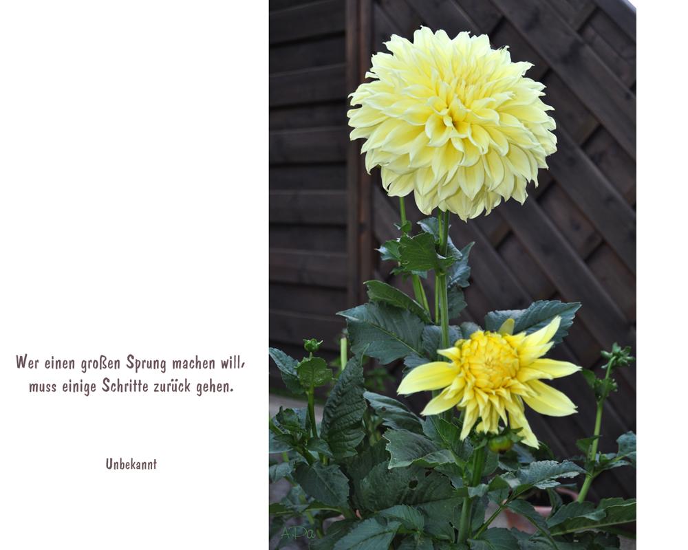 Mein Spruch Des Tages Foto Bild Karten Und Kalender Grußkarten
