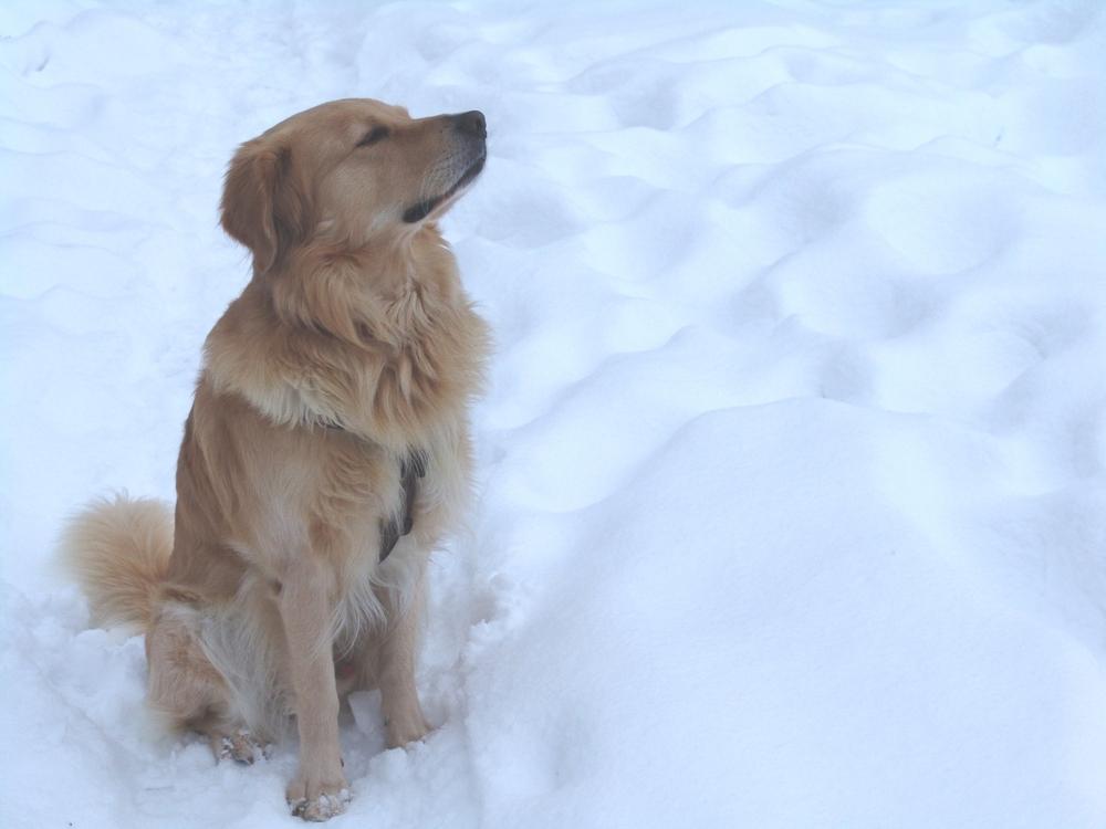 mein stolzer Hund