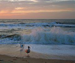 mein Strand , meine Brandung, meine Möwe...