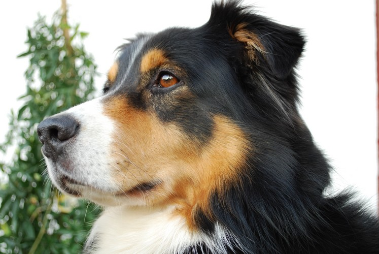 Mein süßer Hund. :] Gut oder nicht gut?