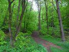 Mein täglicher Spaziergang durch den Mackenbacher Wald - Teil II