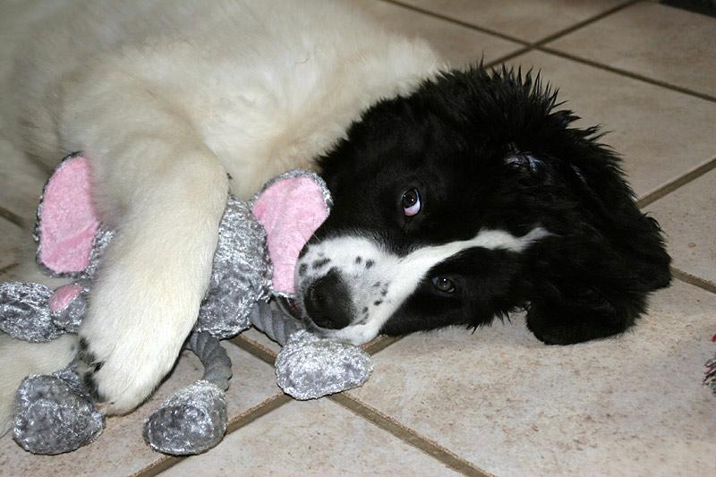 Mein Teddy...