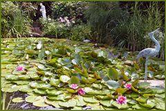 Mein Teich im Juni -