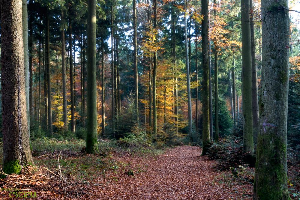 .mein Wald
