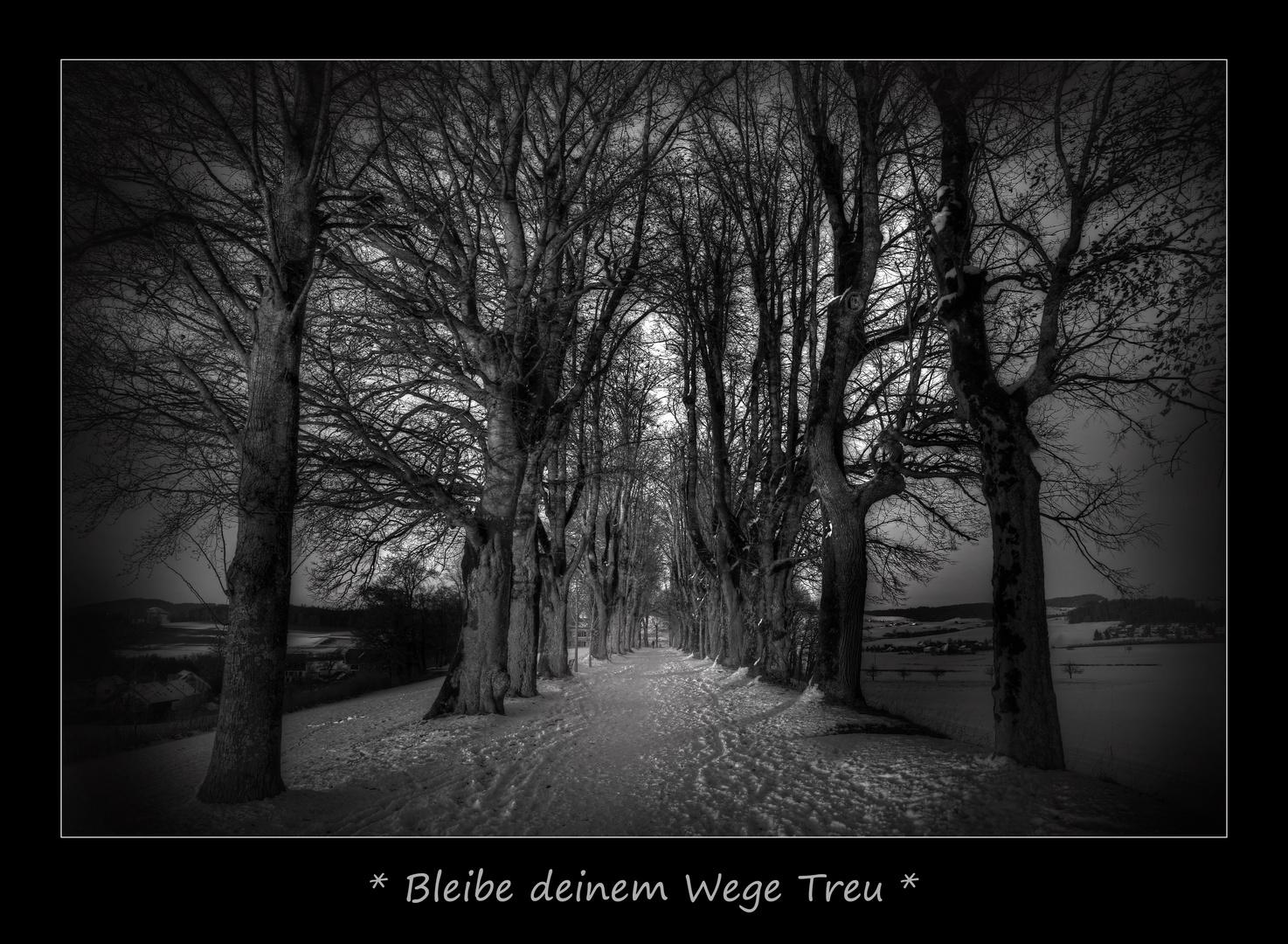Mein Weg - Dein Weg