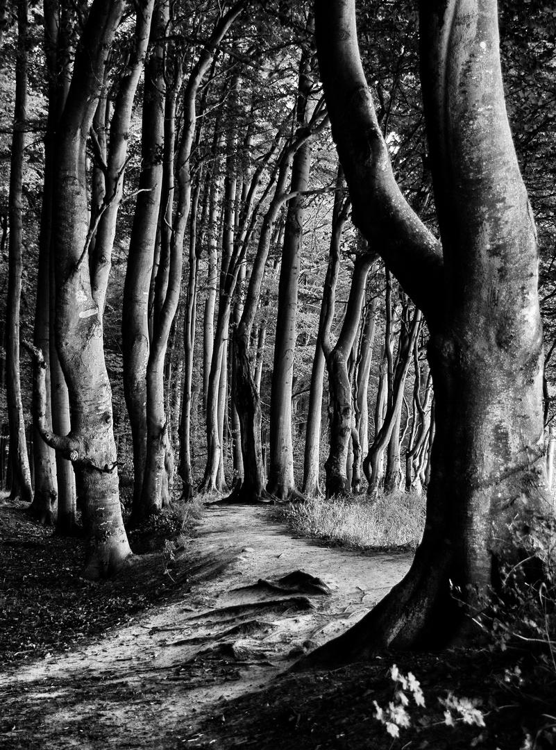 Mein Weg durch den Zauberwald!