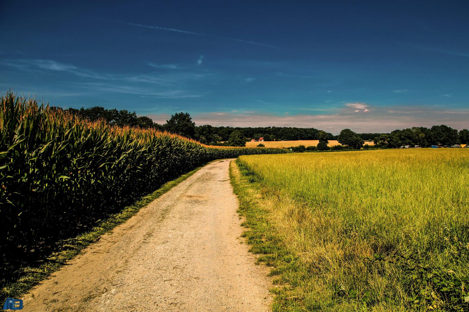 Mein Weg durch die Ried