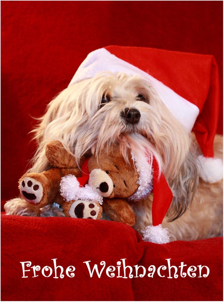 Weihnachtskarten Tiere.Mein Weihnachtsteddy Foto Bild Karten Und Kalender