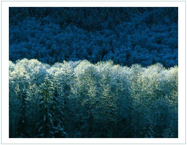 Mein Winterwald
