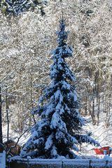 Mein Wunsch für den 24.12. - Weiße Weihnachten