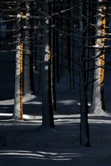 mein zweites winterbild...