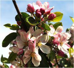 mein.Apfelbaum