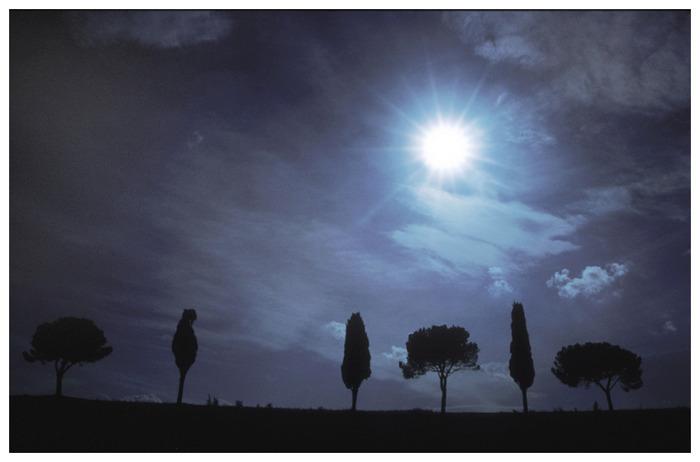 meine 6 Lieblingsbäume gegen die Sonne