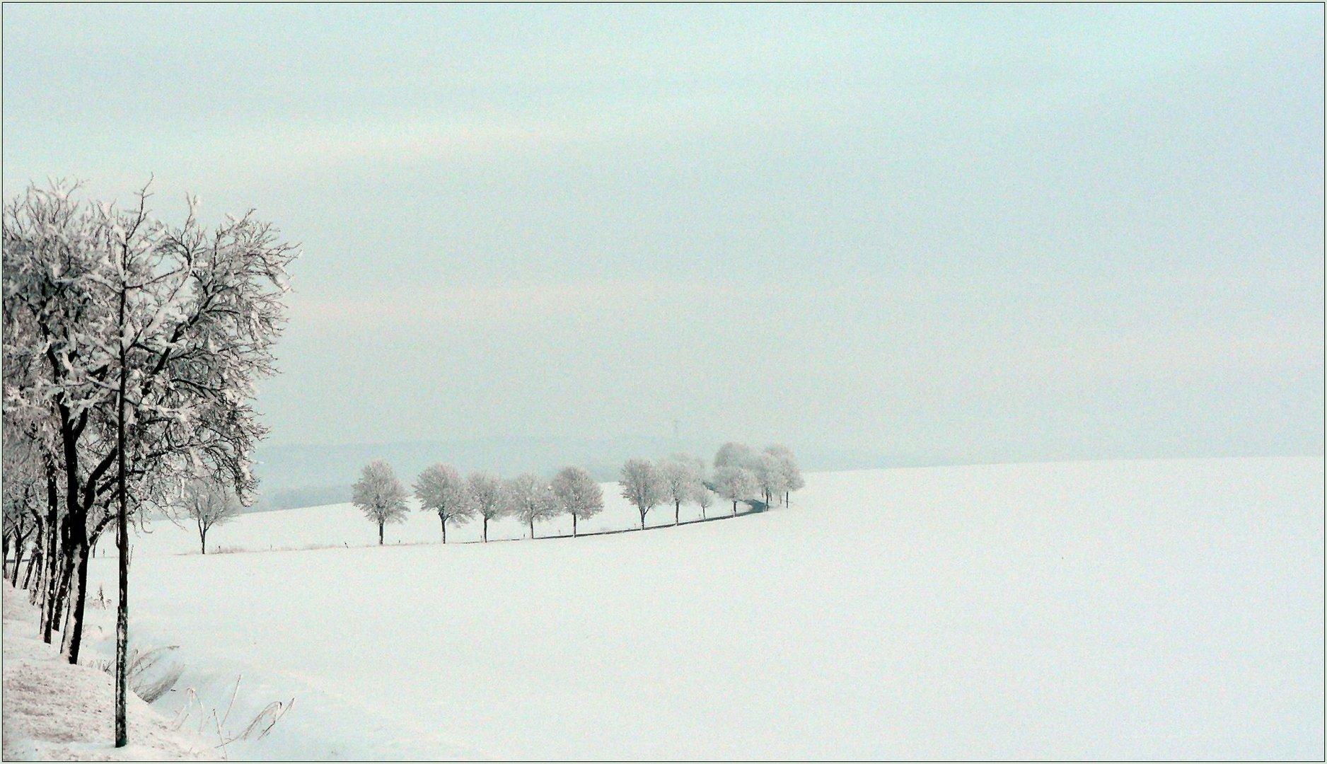 """""""Meine"""" Bäume im Winterschlaf"""