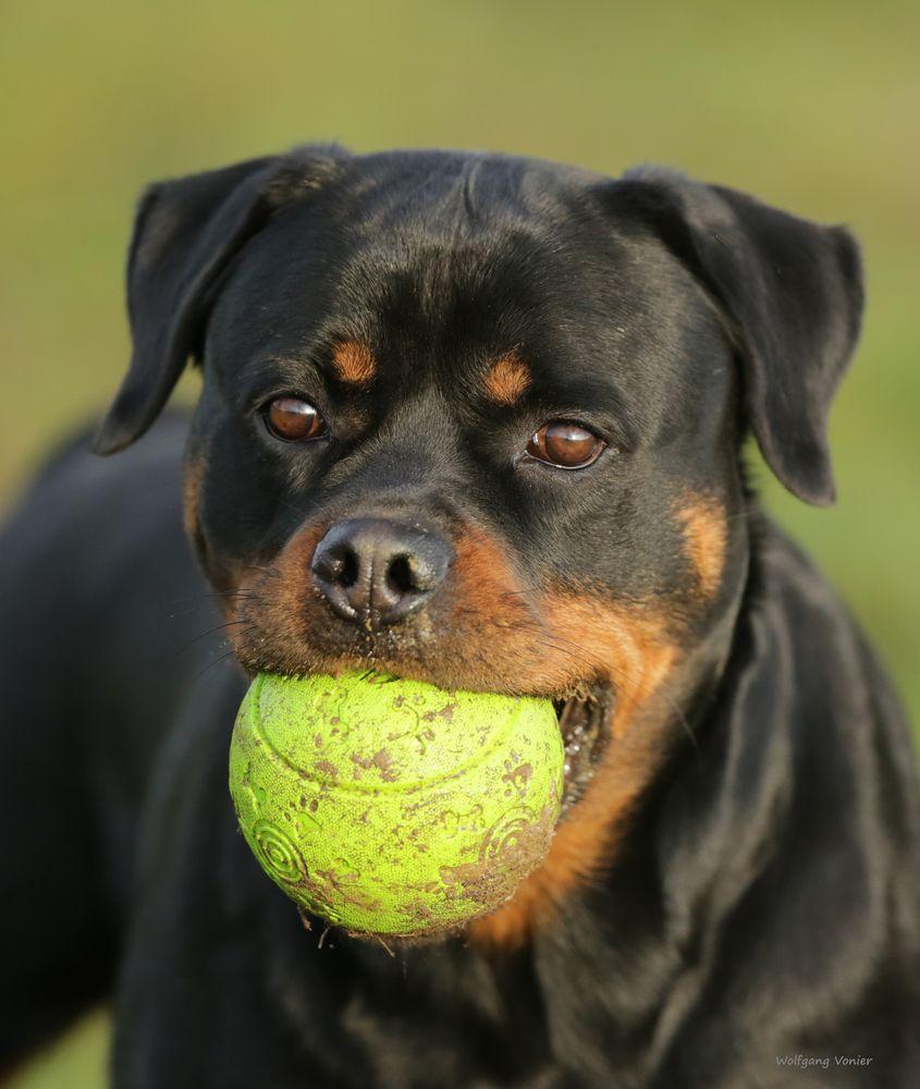 meine Ball