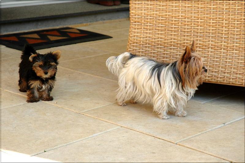 Meine beiden Lieblinge Dorie und Josie