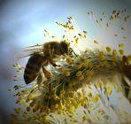 Meine Biene.....berühmt.....