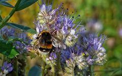Meine Bienenfreude