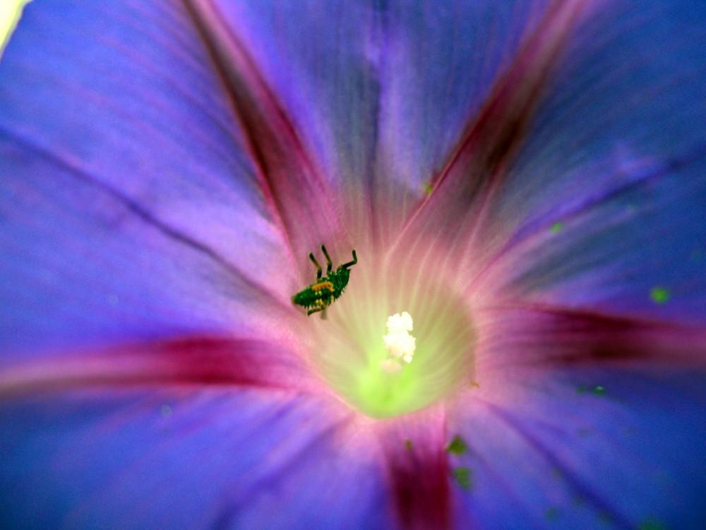 .....meine Blüte!