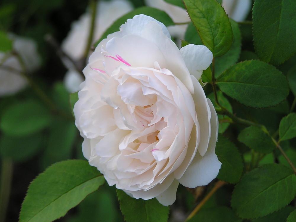 meine Blume