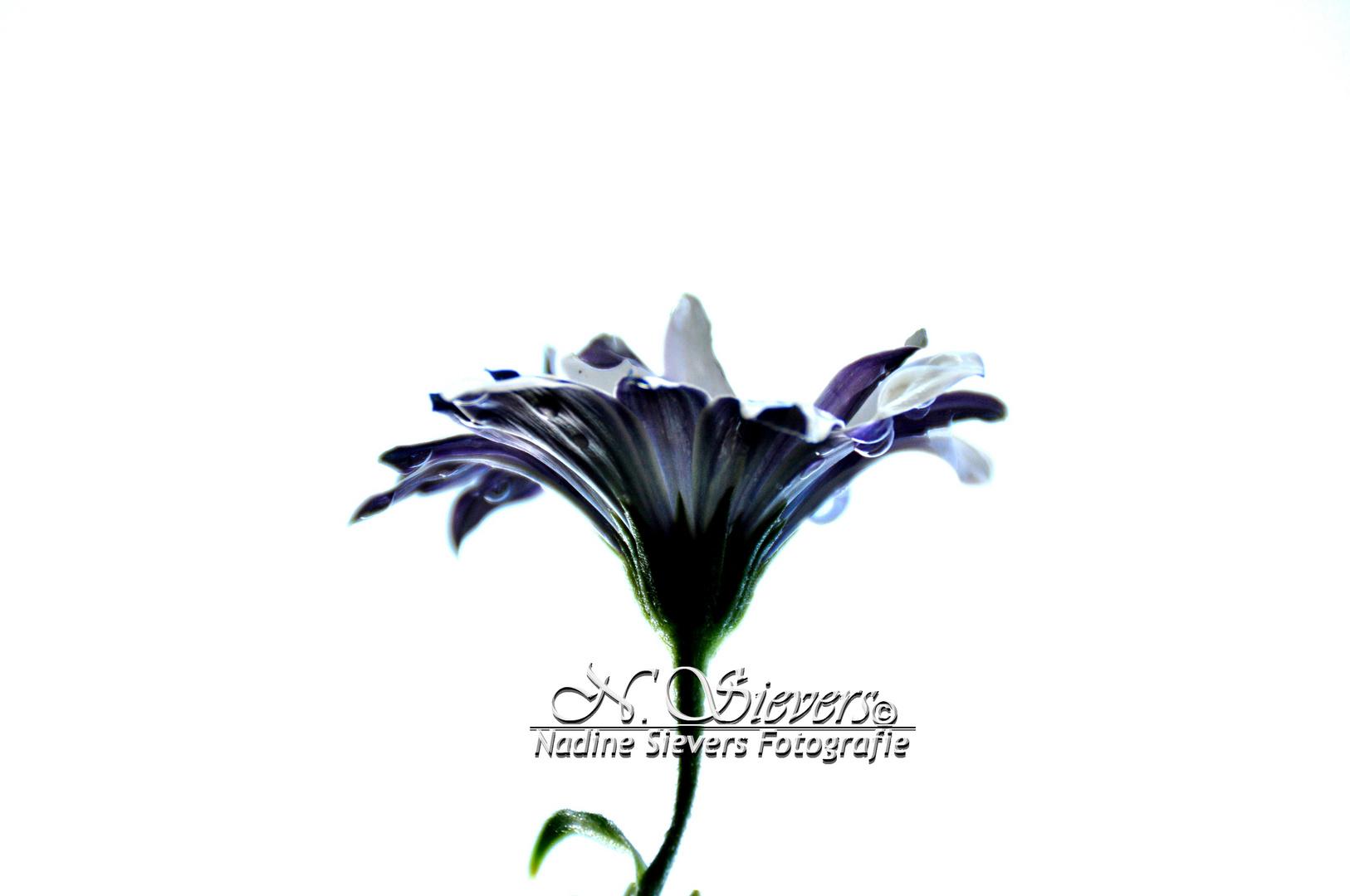Meine Blume am Stall :)