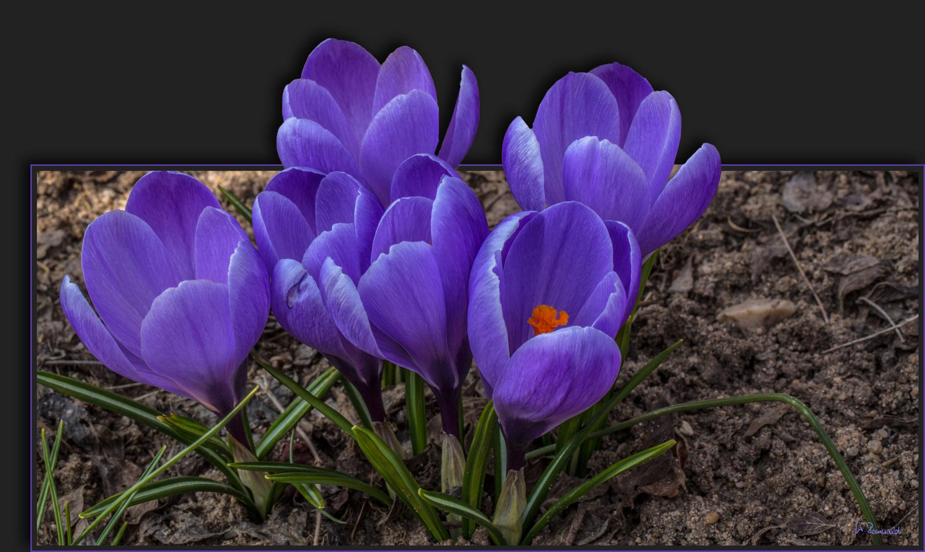 Meine Blumen ....