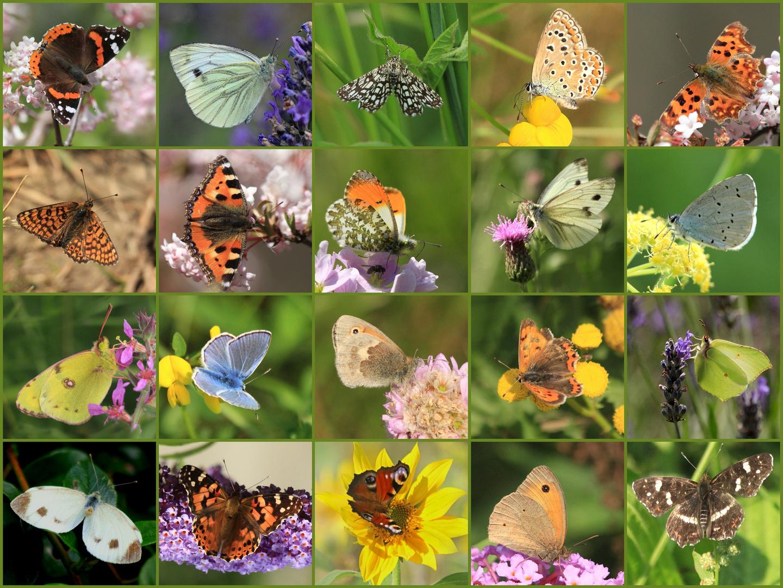Meine bunte Faltersammlung 2017, die Zeit der Schmetterlinge...