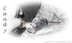 Meine Candy frisst am Liebsten aus meiner Hand :-)