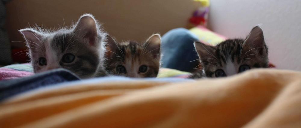 Meine Drei Jungen Kätzchen