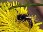 Meine erste Biene 2010