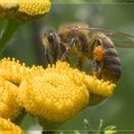 """""""Meine ERSTE Biene"""""""