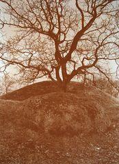 Meine erste Kallitypie - Baum des Lebens.......