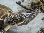 Meine erste Schildkröte so nah (2)