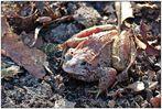 Meine Ersten in 2014 - Amphibien