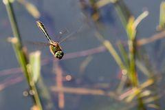 Meine ersten Libellen - 2