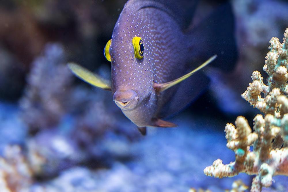 Meine ersten Versuche im Aquarium Teil 2