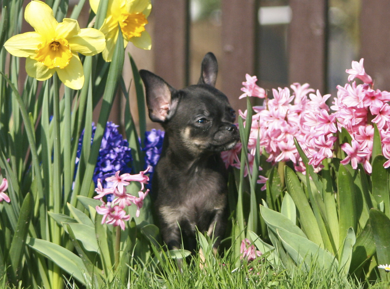 Meine erster Frühling