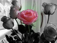 """Meine Farbe ist """"Rosa"""""""
