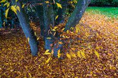 """Meine """"Farnblättrige Rotbuche"""" ... all leaves fallen"""