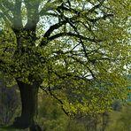 meine Freundschaft zu den Bäumen und die Freude daran