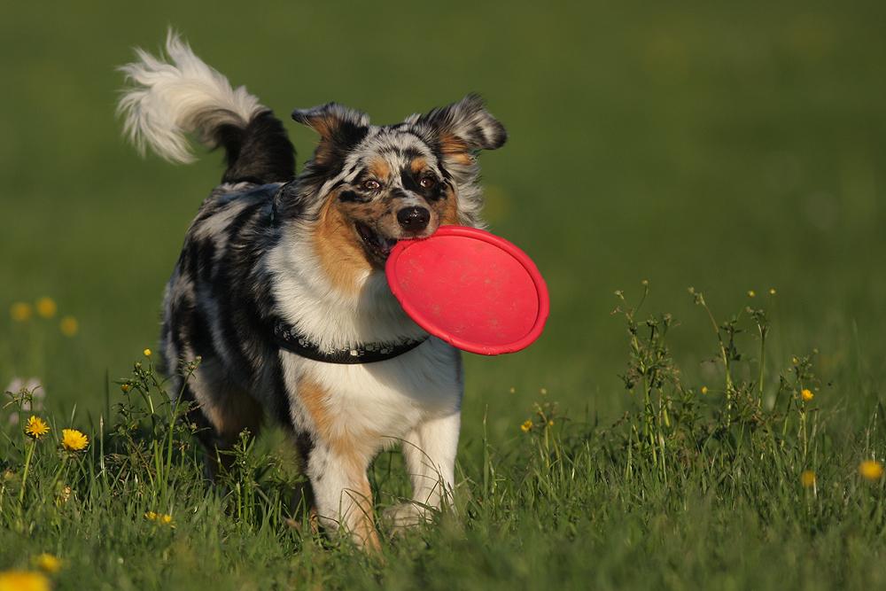 """""""Meine Frisbee"""""""