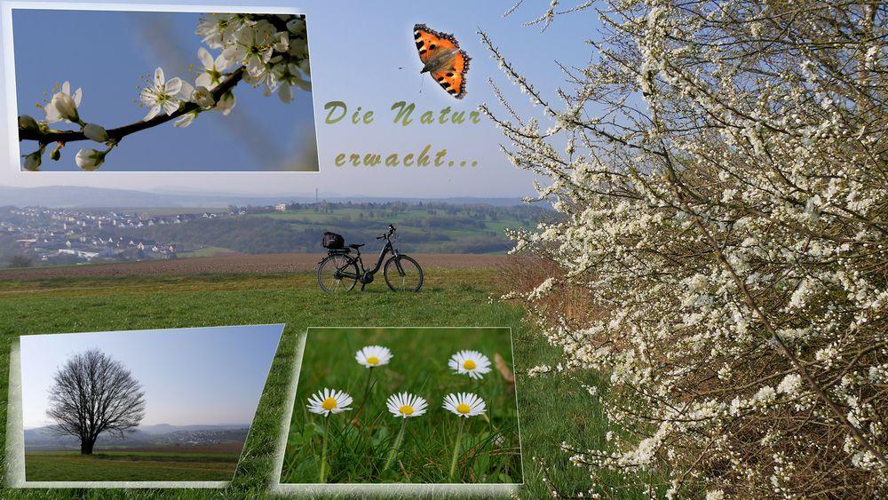 meine Frühlngs Radtour