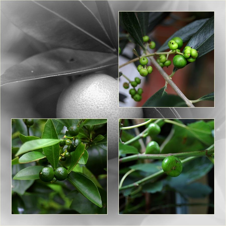 meine grünen Früchtchen