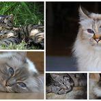 meine Kätzchen :0)